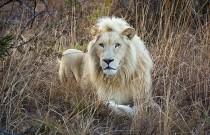 thandeka-lodge-wildlife-12