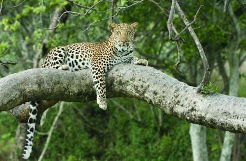 Black Leopard Camp Mpumalanga Gateway Tours